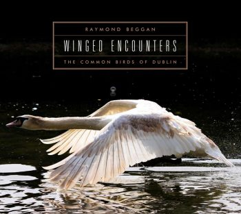 1-wingedencounters-ppc-cover
